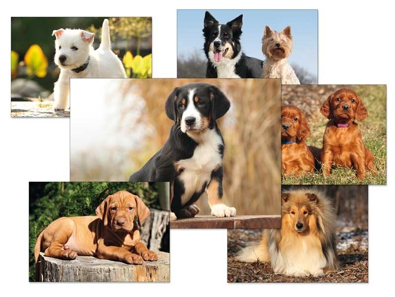 Pohlednice dětské psi - mix motivů
