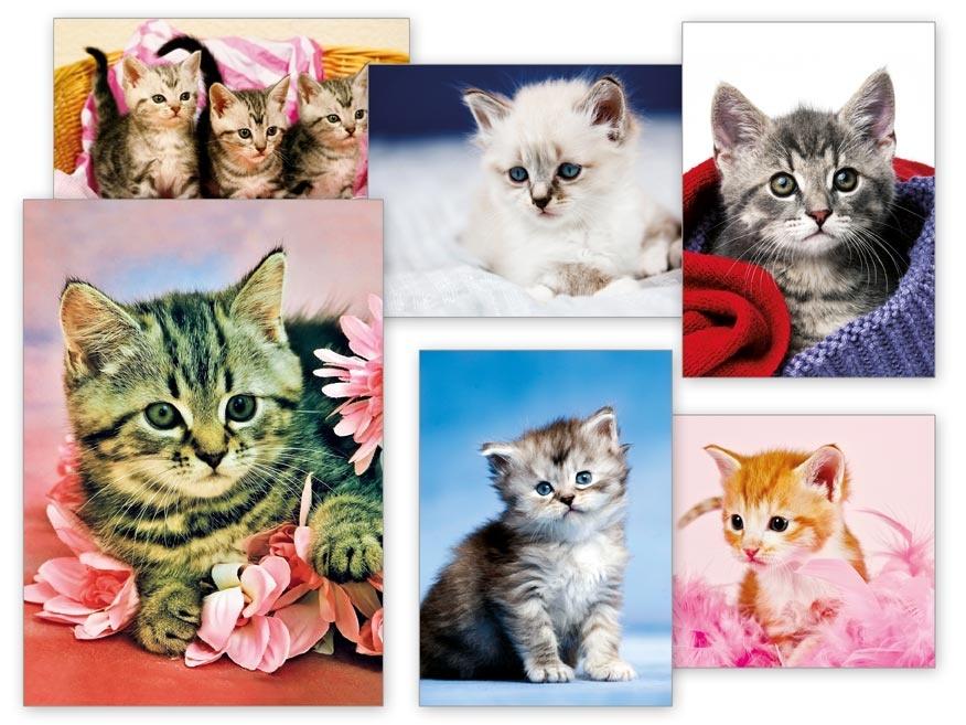 Pohlednice dětské s koťátky - mix motivů